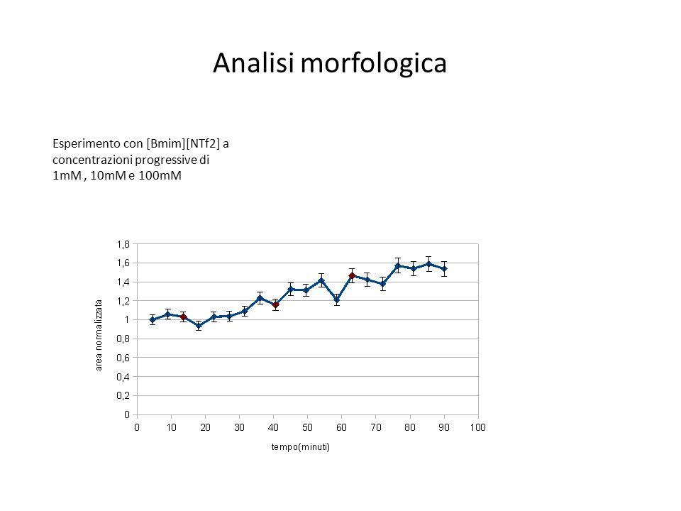 Analisi morfologica Esperimento con [Bmim][NTf2] a concentrazioni progressive di 1mM , 10mM e 100mM